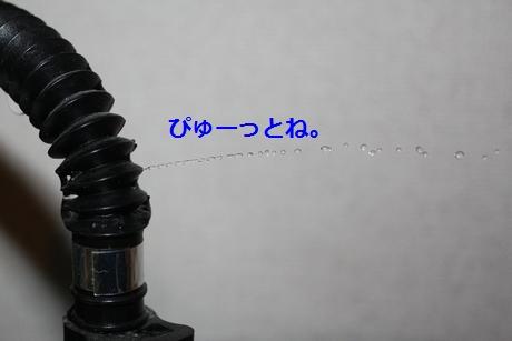 IMG_9845.JPG