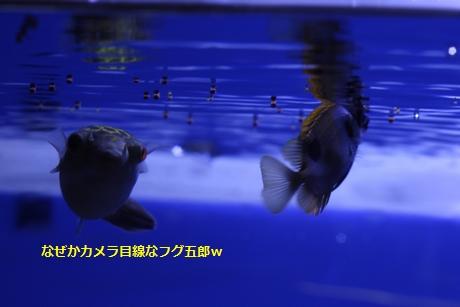 IMG_9364.JPG